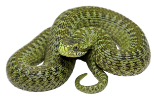 green-serpent